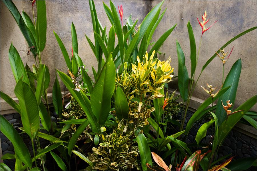 Цветы в душе