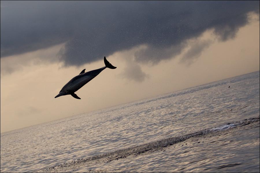 Дельфин-выпендрежник