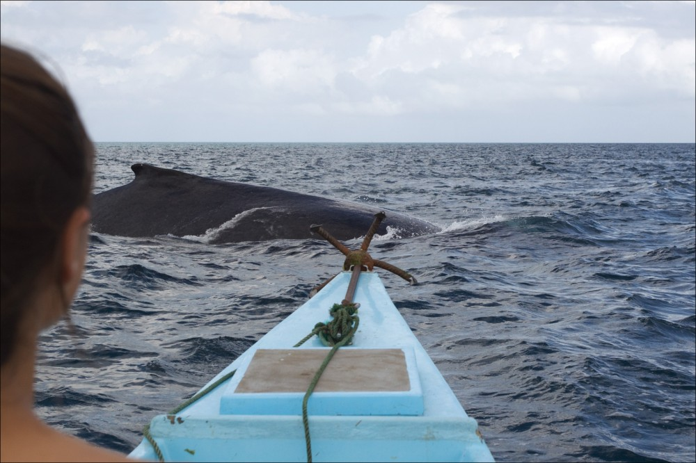 Внезапно кит